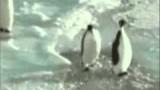 Pingwin- klepanie po plecach