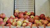 Komunikat ARiMR w sprawie grup producentów owoców i warzyw