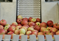 Komunikat-ARiMR-w-sprawie-grup-producentow-owocow-i-warzyw_640x380